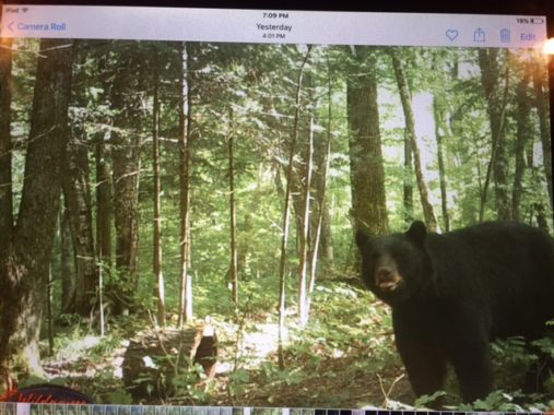 bear-trail-camera-1