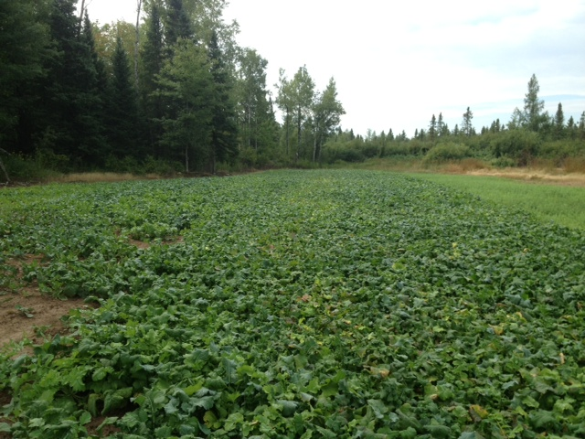 Perfect food plot placement